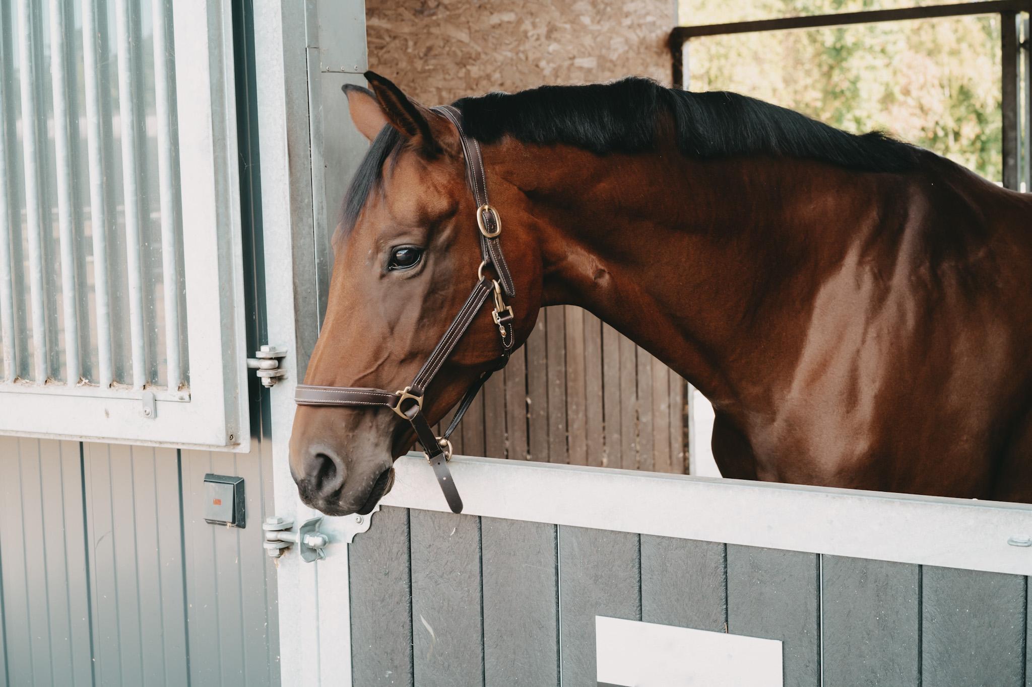 Kurse Pferdepraxis Alstertal