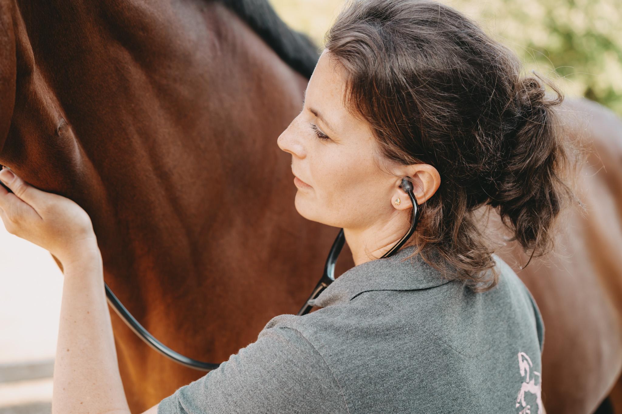 Pferdepraxis Alstertal Dr. Anna Wagner